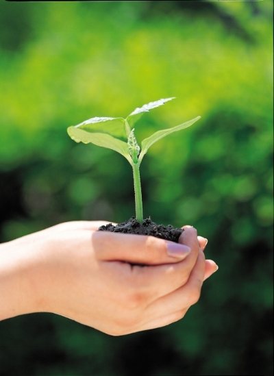 plant and hands.jpg