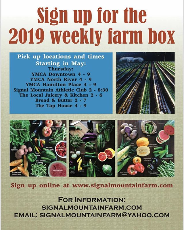 Sign up online for a weekly supply of fresh fruits and vegetables. 22 years in the Business and still growing strong.  www.signalmountainfarm.com  #since1998 #signalmountainfarmcsa  #signalmtnfarm  #signalmountainfarm