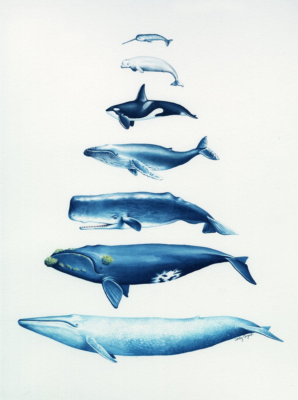 AshleyBryant_Whales.jpg