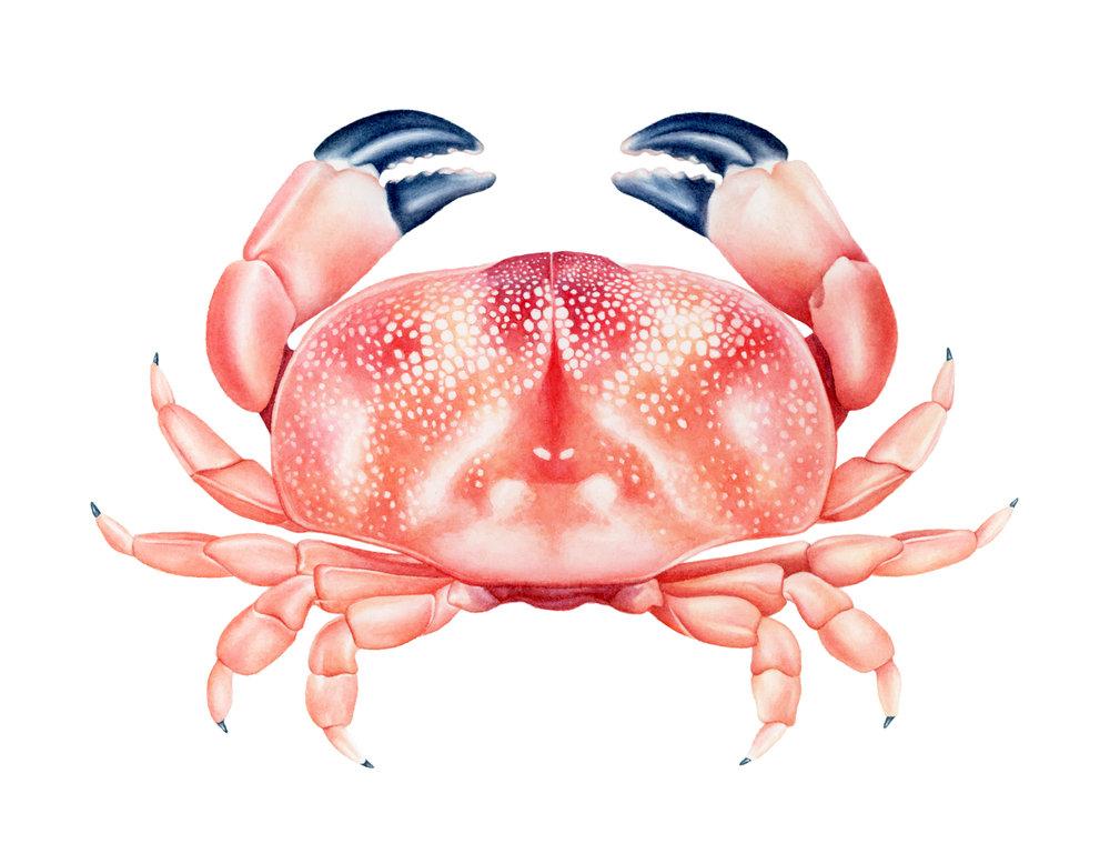 AshleyBryant_Crab.jpg