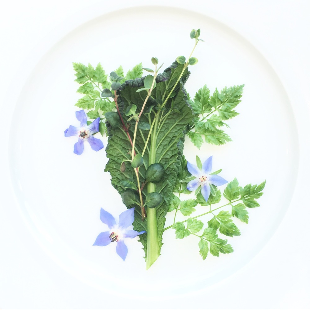 Giant Mustard Greens. Chervil. Broad-leaf Thyme. Borage Flowers.