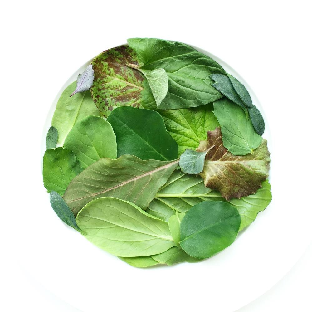 Mereville Lettuce. Baby Bok Choi. Shiso. Good King Henry. Samphire. Moringa. Arugula. Thai Basil. Micro Kohlrabi. Amaranth.