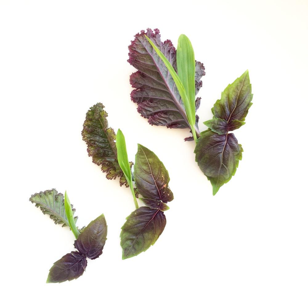Scarlet Kale. Rosie Basil. Popcorn Shoots.