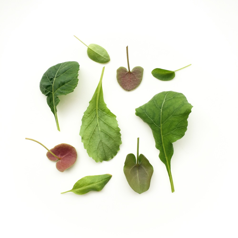 Wasabi Arugula. Buckler-Leaf Sorrel. Green Sorrel.