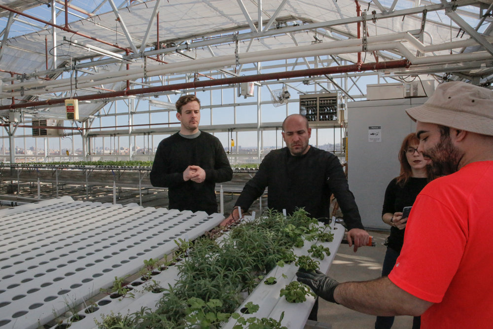 Whether you choose to build a greenhouse, a 'vertical' indoor artificially-lit farm or something else, your decision on equipment and location has huge implications.