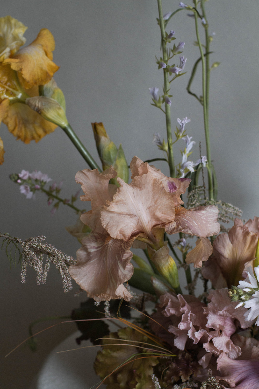 rueanafel-irisfromschreinersgarden-28.jpg