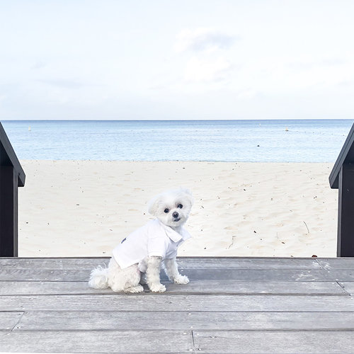 Mochi Ritz Carlton Aruba Beach Front View.jpg