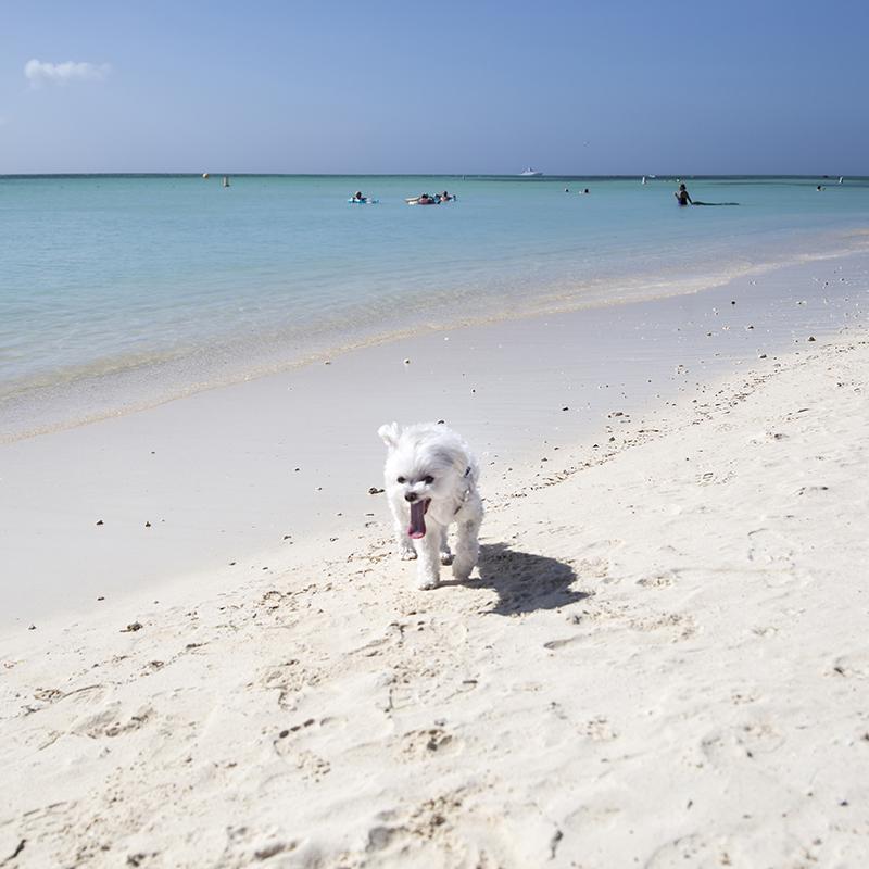 Mochi Ritz Carlton Aruba Running Beach.jpg