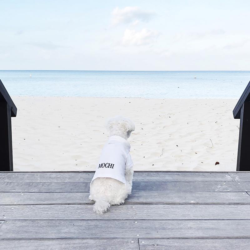 Mochi Ritz Carlton Aruba Beach Back View.jpg