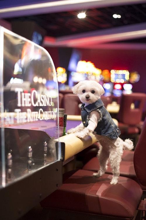Mochi Ritz Carlton Aruba Casino Roulette.jpg