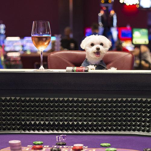 Mochi Ritz Carlton Aruba Casino.jpg