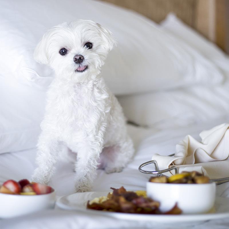 Mochi Ritz Carlton Aruba Breakfast in Bed.jpg
