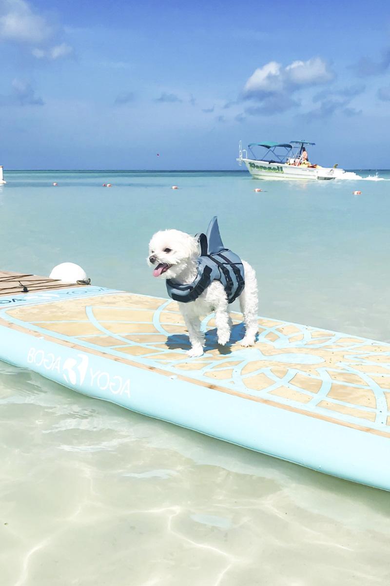 Mochi Ritz Carlton Aruba Shark Paddleboard.jpg