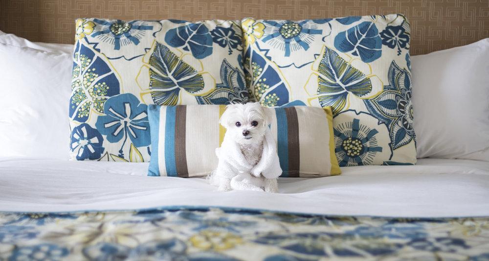Mochi Ritz Carlton Aruba Bed.jpg