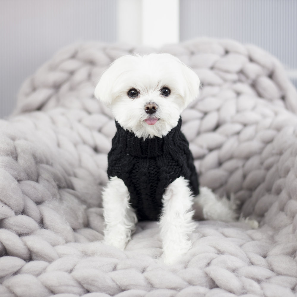 Max Bone sweater + knit blanket (sold out)