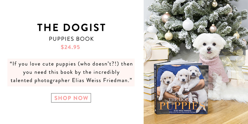 Mochiandthecity Holiday Gift Guide for Dogs - Dogist Puppies Book.jpg