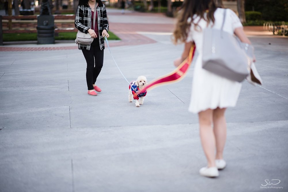 Trojan poodle at USC | Los Angeles Orange County Senior Portrait & Wedding Photographer