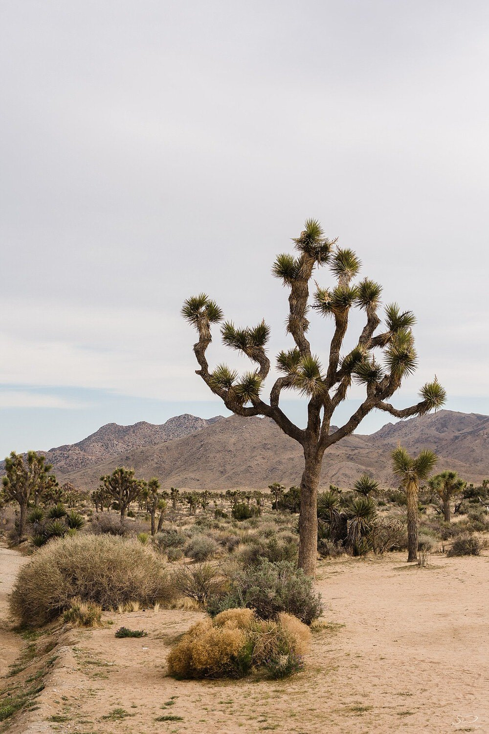 Landscape | Joshua Tree Desert Wedding & Engagement Inspiration