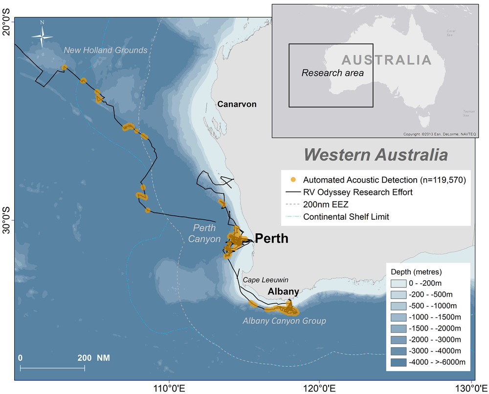 The trackline of the RV Odyssey (2001-2002) off the coast of Western Australia. The orange areas are where we heard sperm whale echolocation 'clicks'.