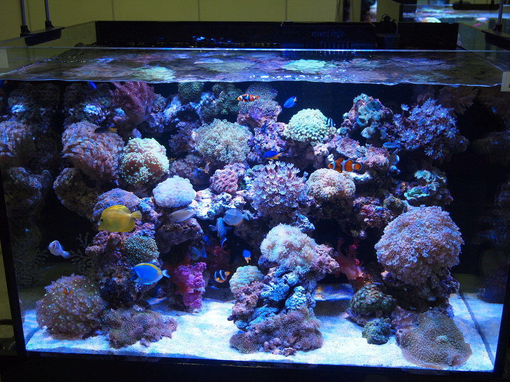 MATRIALS  Our custom aquariums are typically constructed with acrylic or high clarity glass.