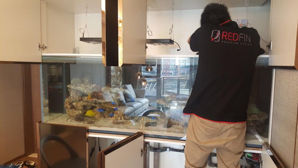 维修保养   我们可以为各种各样的水族馆作维修保养,包括淡水,珊瑚礁,种植甚至水母水族馆。提供一系列维护套餐。
