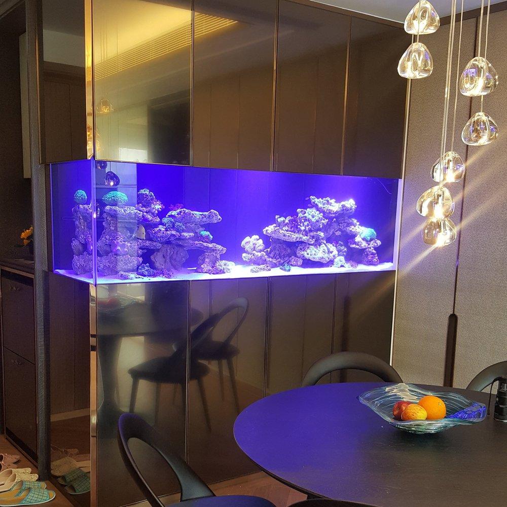 活珊瑚水族箱 - 香港私人住宅