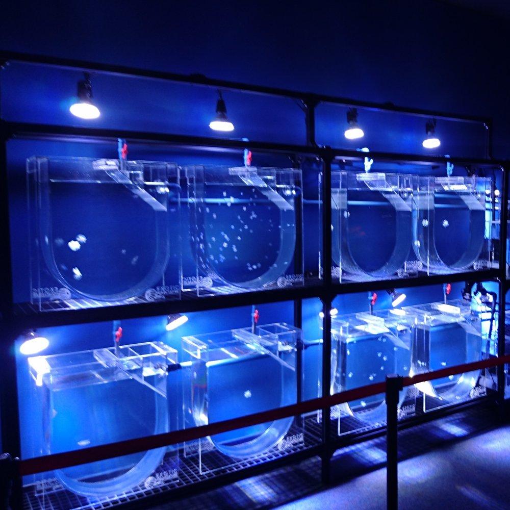 水母水族館教育展覽 - 中國成都立方海洋水族館