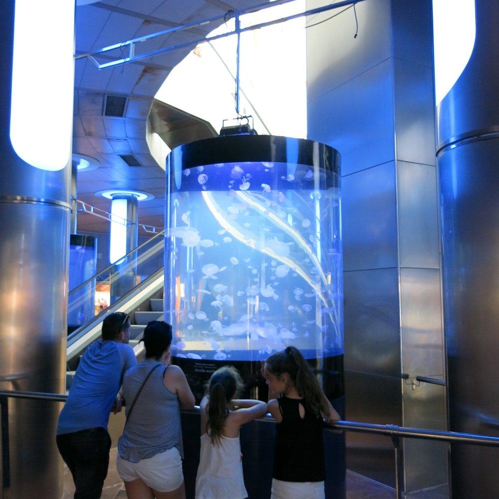 水母水族館展覽 - L'Oceanogràfic     巴倫西亞,西班牙