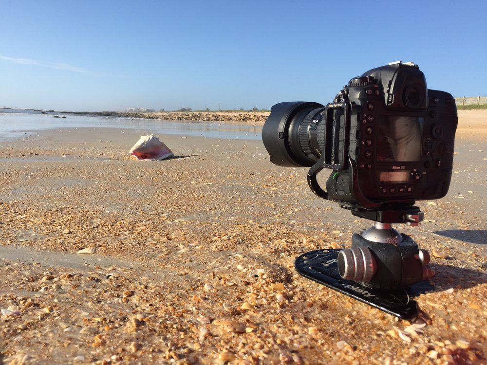low angle beach shell with a platypod