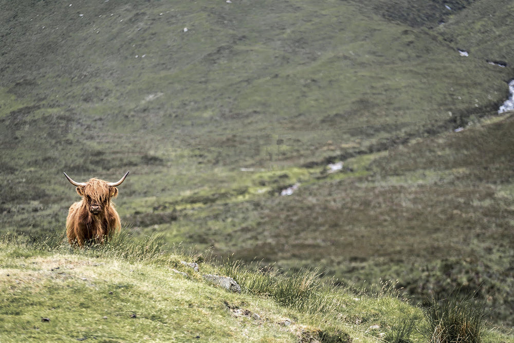 Scotland - Travel Photography with Platypod Ultra