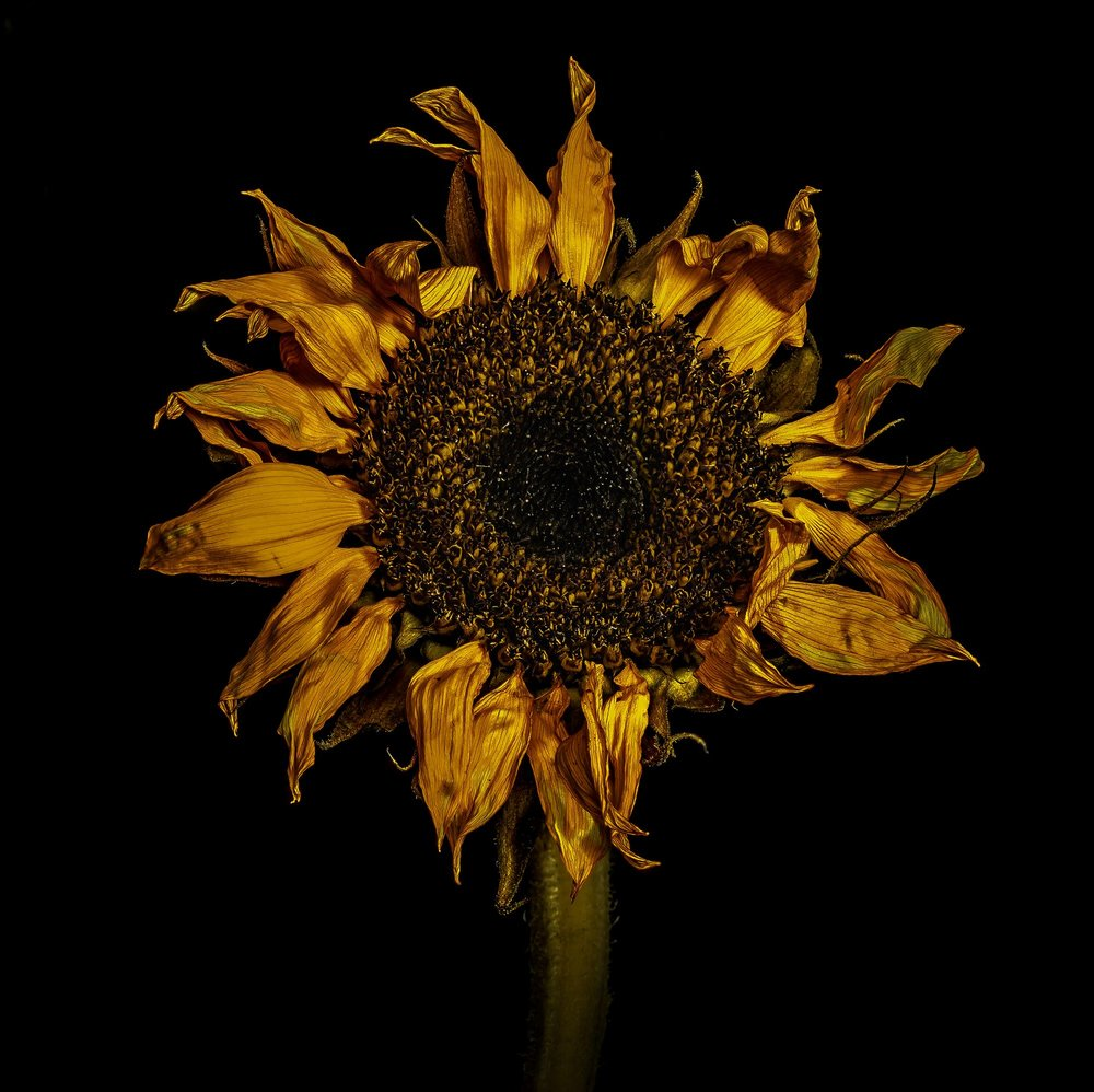 Crunchy Sunflower