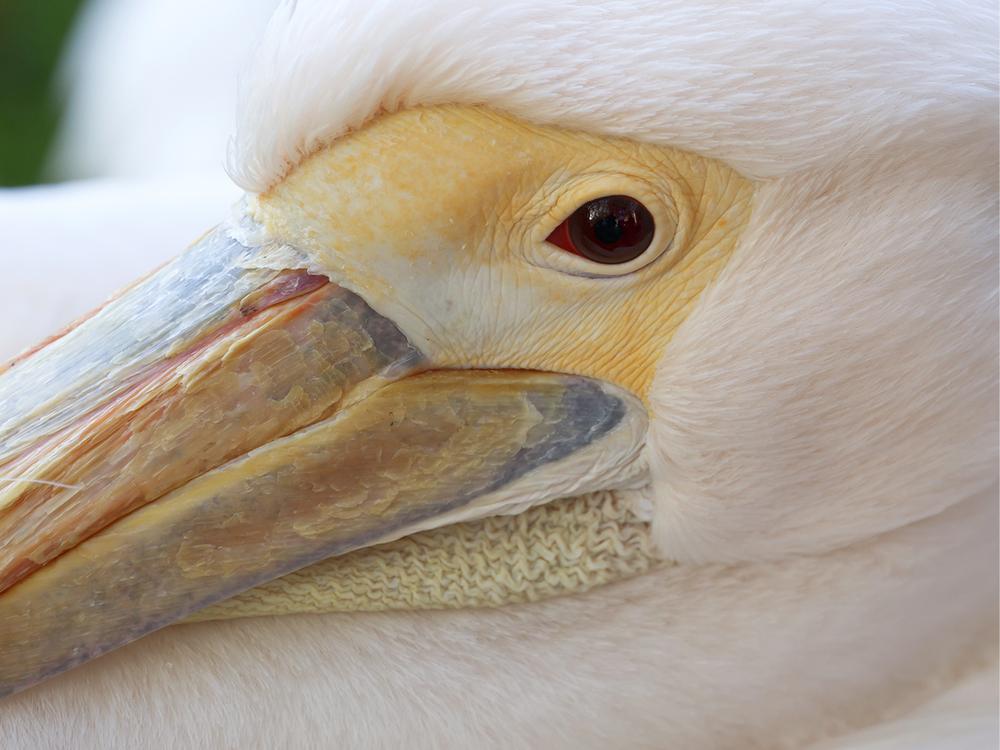 Pelican-Headshot_prashant.jpg