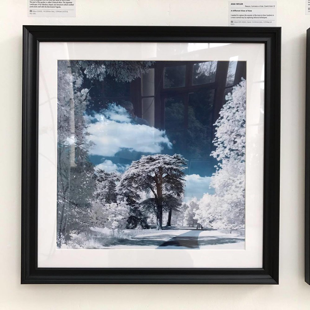 Kew2.jpg