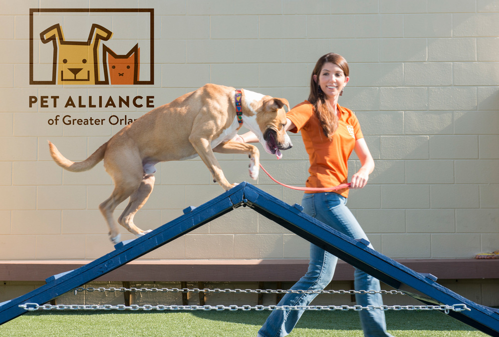 Pet Alliance of Greater Orlando Volunteer walks dog