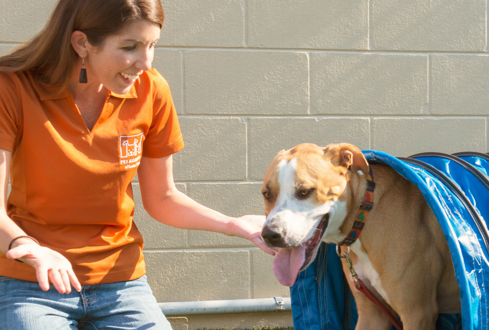Pet Alliance of Greater Orlando Volunteer with dog