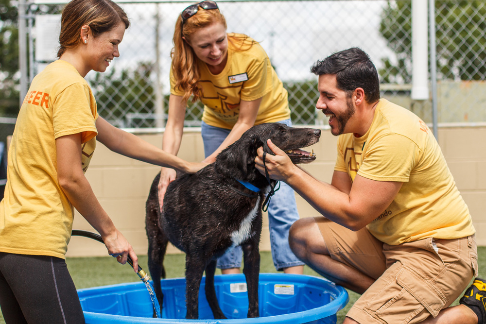 Pet Alliance of Greater Orlando volunteers with dog