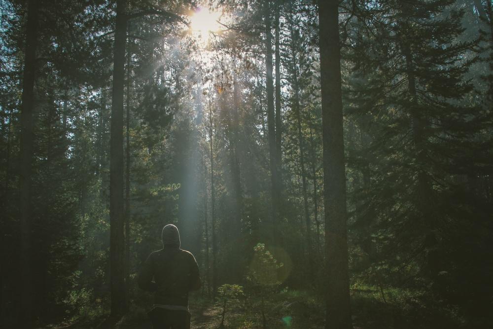 nature-sunny-man-person.jpeg