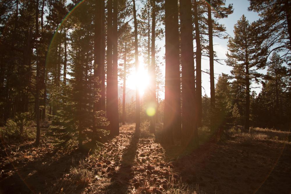 Sunny-outdoors-trees.jpg