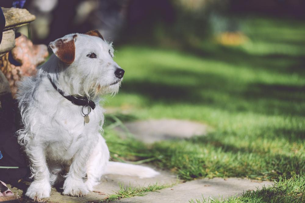 walking-garden-dog-outside.jpg