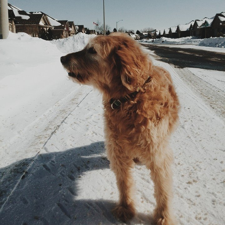 Tucker's Last Christmas, he was 15