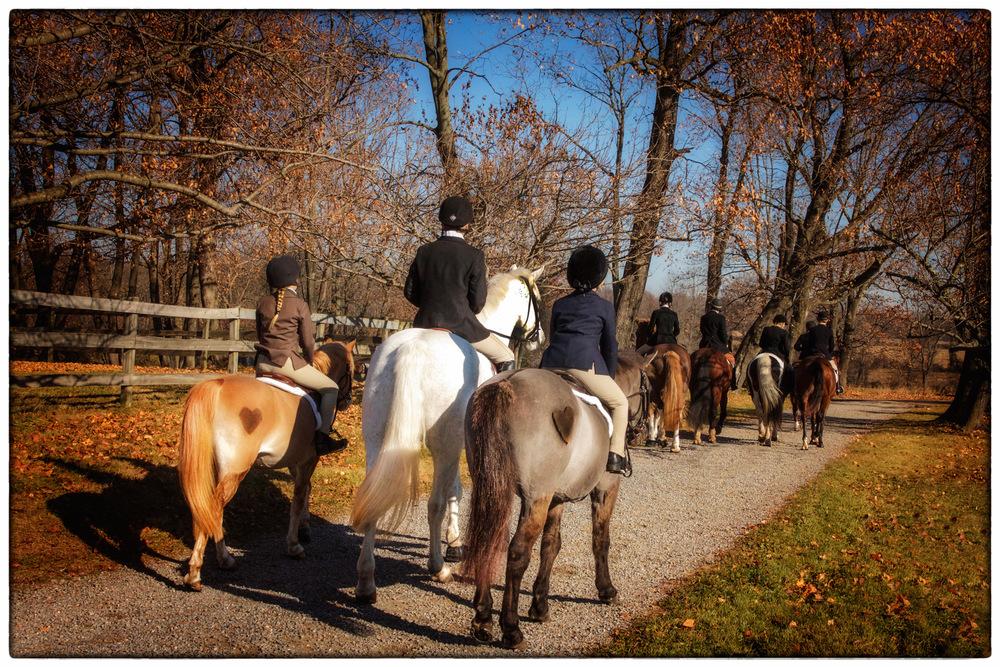 I-Heart-Horses.jpg