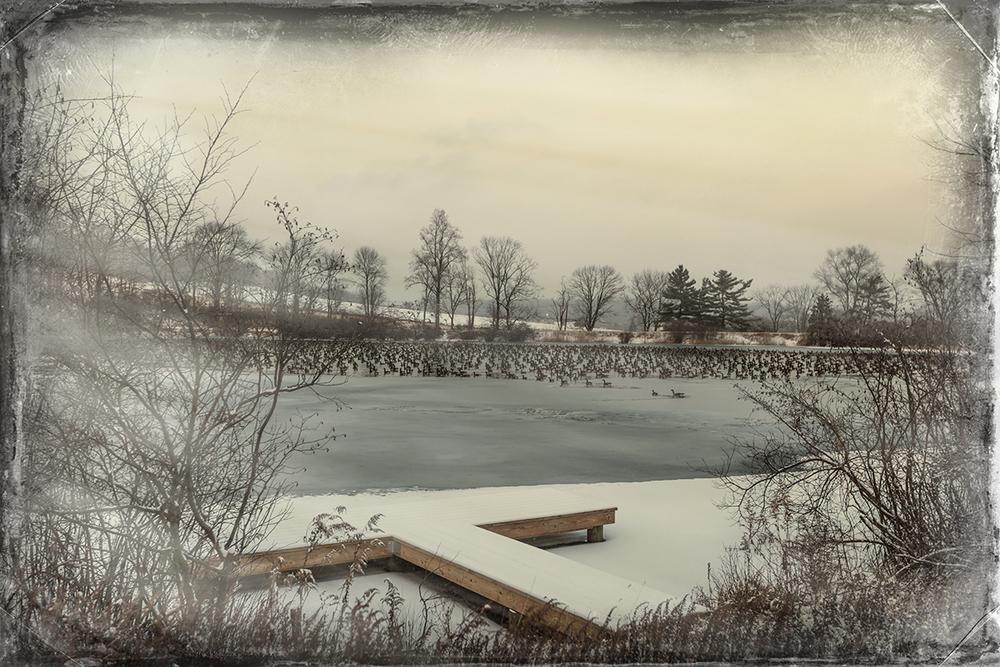 Pond-&-Geese-1.jpg
