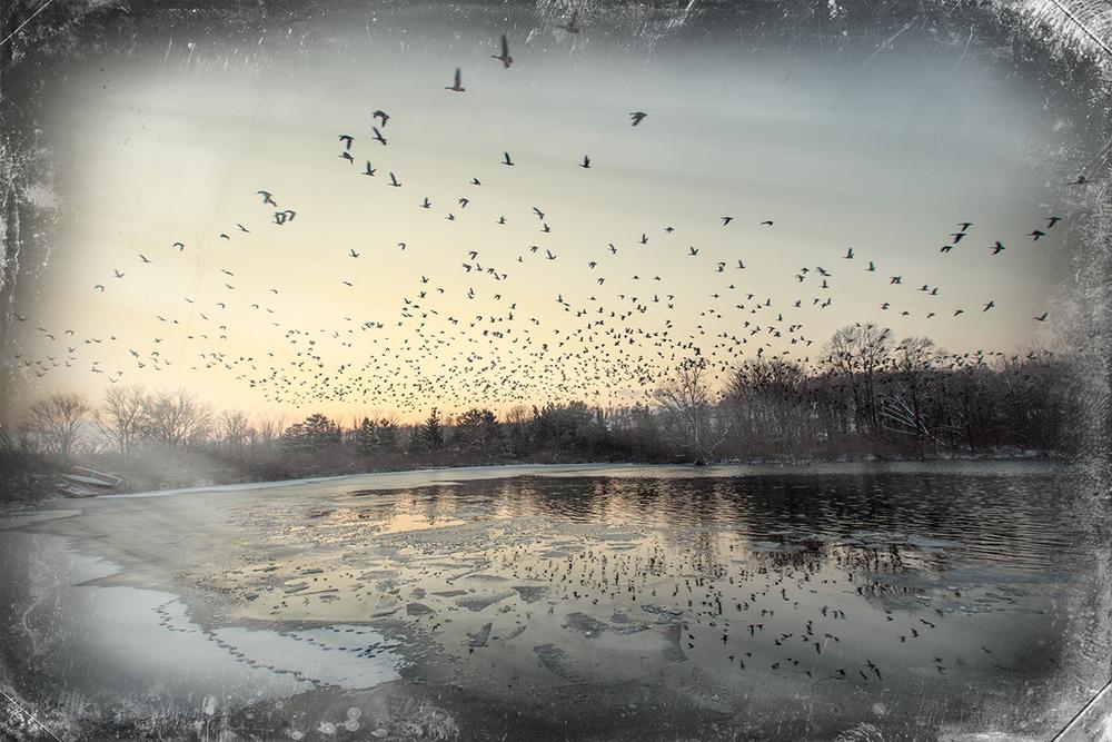 Pond-&-Geese-3.jpg