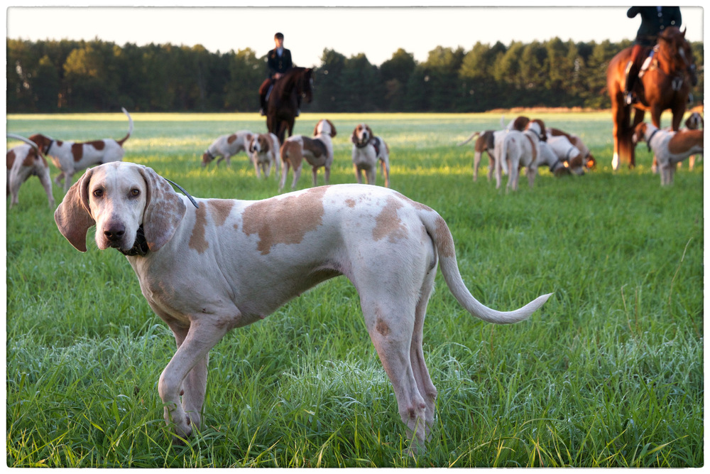 Dog-Alert-2.jpg