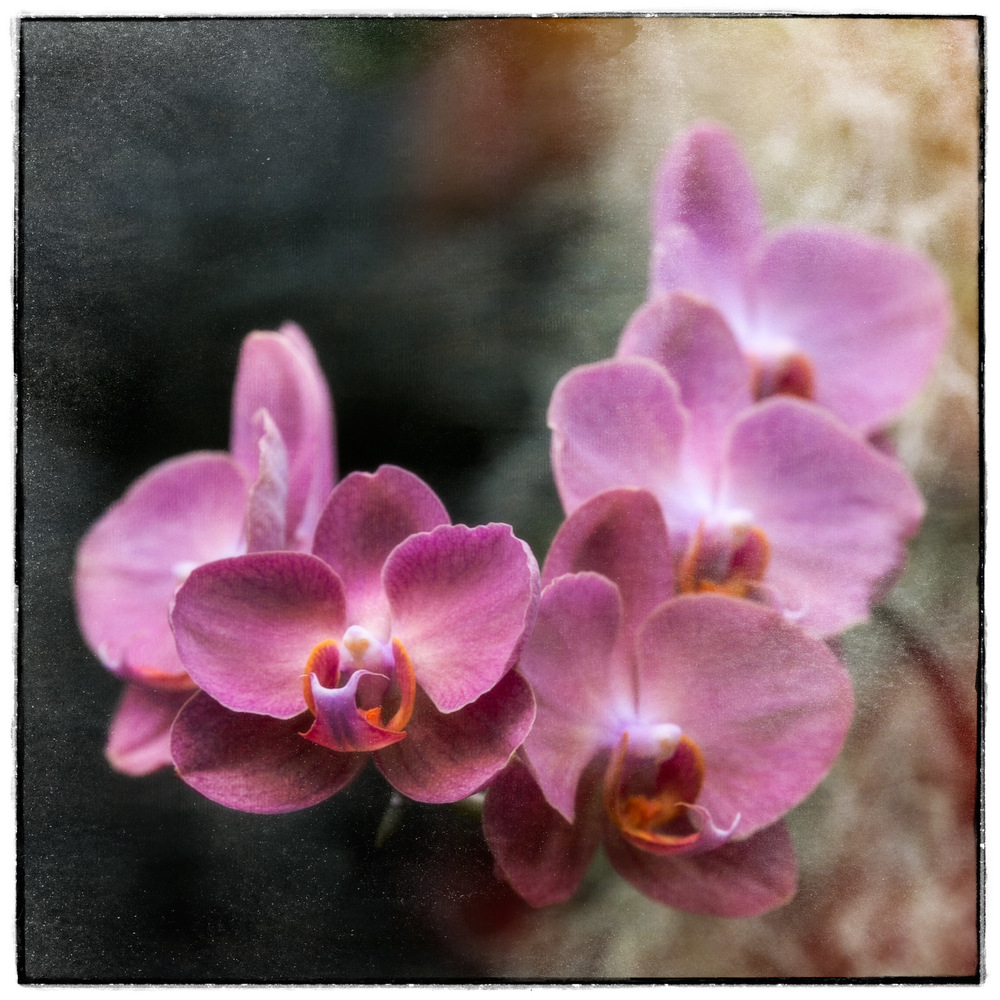 PinkOrchard-3.jpg