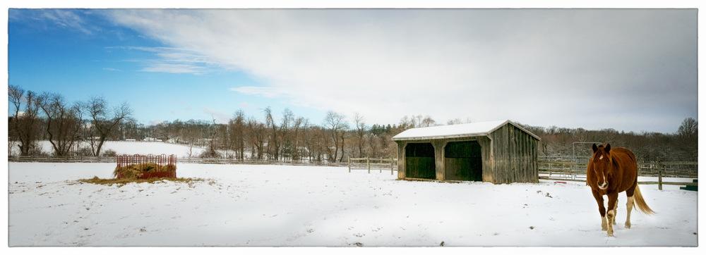 Horse-in-Field-1a.jpg
