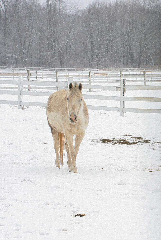 1 WinterHorse.jpg