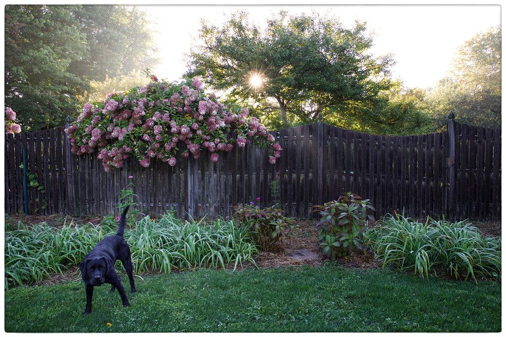 Teddi-Gardening2.jpg