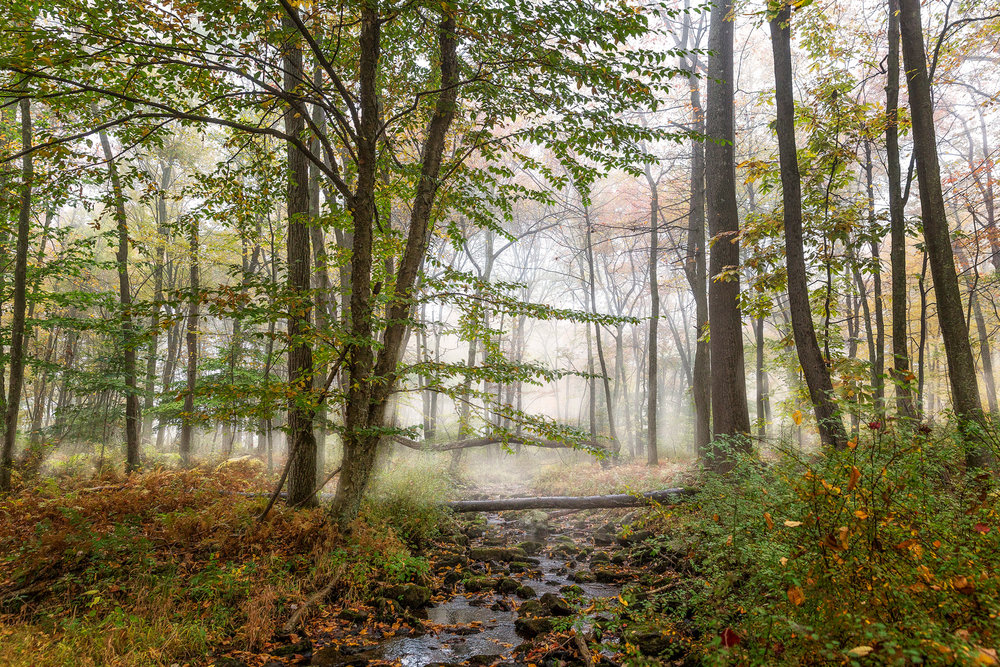 ForestVista-2a.jpg