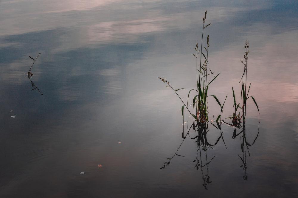 Reeds-1a.jpg